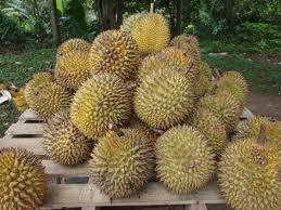 durian-davao